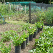 Image of Bildeston allotment