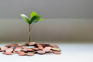 Image of plant growing from money to illustrate grants and funding